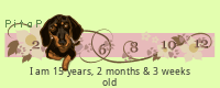 PitaPata Dog (HxWm)