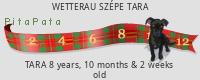 PitaPata Dog (UB4y)