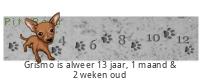 PitaPata Dog tickers