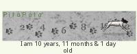 PitaPata Dog (uJTb)