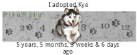 Finding A Place/Someone to adopt a new Siberian Husky in CT Xcwxm5