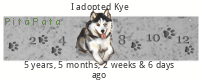 I NEED HELP! SOON TO BE HUSKY OWNER  Xcwxm5