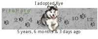 52 weeks of Husky Xcwxm5