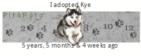 New Husky Owner Xcwxm5